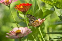 9714 http://www.kurtjohnsonphotography.com/