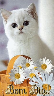 Flores e frases: Bom Dia