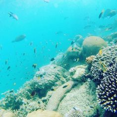 Snorkeling at Great Barrier Reef #backpacker #australia #whitsundays #greatbarrierreef #snorkeling by mathildevesterskov http://ift.tt/1UokkV2