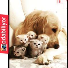 😍👉 @odabiliyor 😍 🐶 🐕 🐩 🐱 🐃 🦁 😍🐈🐱🐈😍 🐶 🐕 🐩 🐱 🐃 🦁 🐯 🐽 🐥 🐧 🦌 🦋 🦂 🐜 #animallovers 🐈 🐕 🐩 🐱 🐃 🦁 🐯 🐽 🐥 🐧 🦌 🦋 🦂 🐜 😍🐈🐱🐈😍 🐶 🐕 🐩 🐱 🐃 🦁 🐯 🐽 🐥 🐧 🦌 #dog… Dogs, Animals, Instagram, Animales, Animaux, Animal Memes, Animal, Pet Dogs, Dog