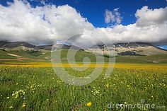 A view of Vettore mountain with many flowers in the spring - Umbria - Italy - National park of Sibillini mountains.