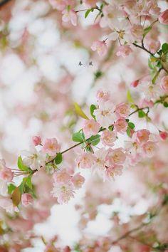PetalageAngel采集到花开の声音~(347图)_花瓣摄影
