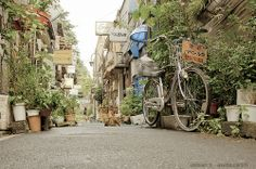 Japan Tokyo Piss Alley Cat | Flickr - Photo Sharing!