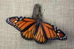 Monarch Butterfly Wood Carving, Hand Carved by Mike Berlin, Woodcarving, Wall Sculpture, Wood Sculpture, Wall Art by BerlinGlass on Etsy