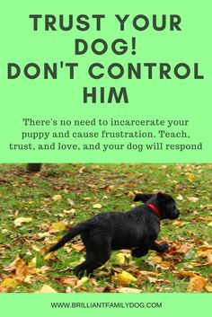 It's trust that will win your new puppy, not control! Read the post ...