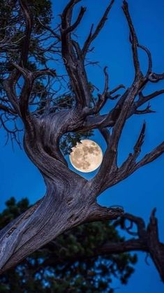 Beautiful Moon, Beautiful World, Beautiful Places, Shoot The Moon, Grand Canyon National Park, Moon Art, Science And Nature, Nature Pictures, Belle Photo