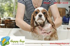 73 best dog and pet wash calgary images on pinterest animal happybays provide a responsible dog wash daycare service in calgary that leaves your dog feeling clean fresh and happy solutioingenieria Choice Image