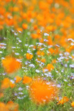 Spring Flower Play