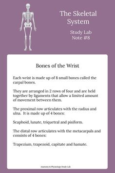 Learn the skeletal system easily and quickly using our anatomy and physiology flashcards and quizzes. Find out more by clicking on the link here. Basic Anatomy And Physiology, Radiology Student, Psychology Studies, Nursing School Notes, Human Body Anatomy, Human Body Systems, Skeletal System, School Study Tips, Anatomy Study