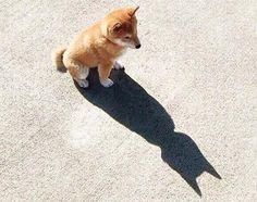 배트맨이 된 멍멍이......ㅋㅋㅋ