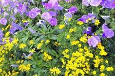 How to Choose Plants for a Full Sun Garden Bed thumbnail
