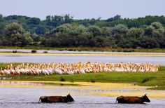 The Danube Delta Experience – 7 days via Bucharest Beautiful Places To Visit, Cool Places To Visit, Danube Delta, Eastern Europe, World Heritage Sites, Travel Destinations, Landscape, Fun Activities, Ukraine