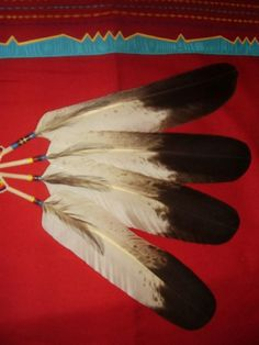 Changes are coming to how you can obtain eagle feathers. New rules will go into affect this fall! According to Indian Country: Of the new proposed rules, Hawk Feathers, Eagle Feathers, Indian Feathers, Feather Painting, Feather Art, Wooden Feather, Feather Bouquet, Eagle Feather Tattoos, Bird Tattoos