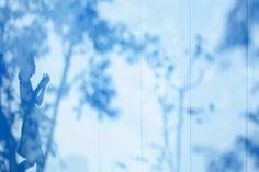 Curtain/青いカーテンのアリス