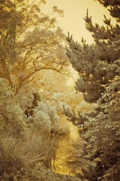 Golden Winter.
