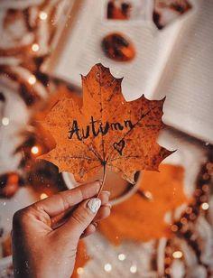 Fall Pictures, Fall Photos, Herbst Bucket List, Fall Inspiration, Cute Fall Wallpaper, Fall Wallpaper Tumblr, Autumn Leaves Wallpaper, Wallpaper Desktop, Halloween Wallpaper