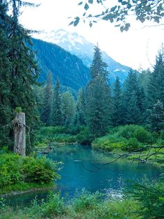 """Fish Creek. Tongass National Forest. Alaska. If it's called """"Fish Creek"""". I can only hope there would be fish in it."""