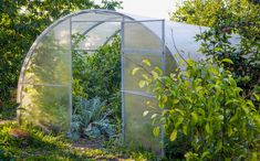 Greenhouse. Organic food. Open greenhouse with tomatoes in the middle of the vegetable garden Walk In Greenhouse, Best Greenhouse, Portable Greenhouse, Polycarbonate Panels, Roll Up Doors, Tubular Steel, Wire Shelving, Organic Recipes, Vegetable Garden