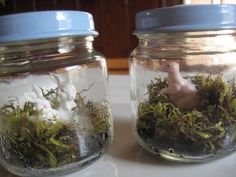 baby food jar terrariums for party favors & decor Baby Food Jar Crafts, Baby Food Jars, Mason Jar Crafts, Mason Jars, Mini Terrarium, Terrariums, Dinosaur Projects, Fun Crafts, Crafts For Kids