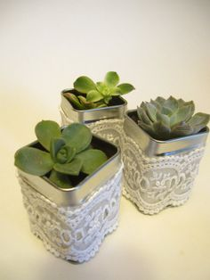 Single Potted Succulent in Square Tin with lace 2 1/2 tall  Great Wedding or Baby Shower Favors There will be enough succulents for you to put