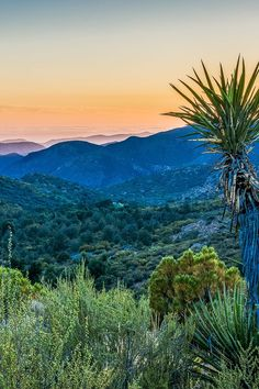 Behind the scenes house sitting in the San Pedro Martir mountains in Baja California Mexico
