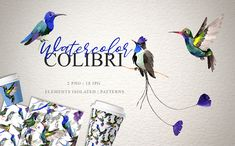 Colibri Watercolor Png (Graphic) by MyStocks · Creative Fabrica Logo Background, Background Patterns, Border Pattern, Scene Creator, Watercolor Design, Pattern And Decoration, Graphic Illustration, Illustrations, Textures Patterns