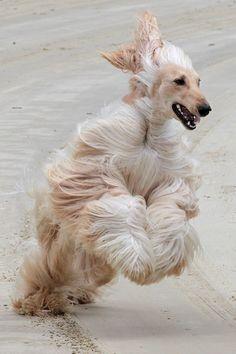 Sand-colored hair tornado at the beach