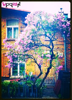 House and lilac