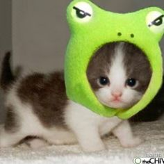 Cermet cat