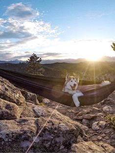 'Camping With Dogs' Instagram Is The Cutest Thing You'll See All Day