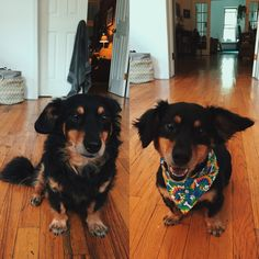 Someone got groomed this weekend!