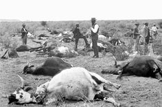 The biological warfare against Ethiopia by the Italians in1887 using a devastating cattle virus   When the Italians were preparing to colonize Ethiopia and Somalia and were encroaching on Ethiopian territory starting from the coast in the Red Sea, they had an in genius idea of softening up the resistance from Ethiopians that was becoming increasingly fierce against them.  In 1887, they imported two cows from Bombay known to be infected by the rinderpest virus which never existed in African…
