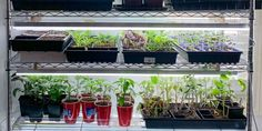 img_2620 Types Of Lighting, Shop Lighting, Seed Raising, Led Shop Lights, Keep The Lights On, Plant Needs, Urban Farming, Seed Starting, Grow Lights