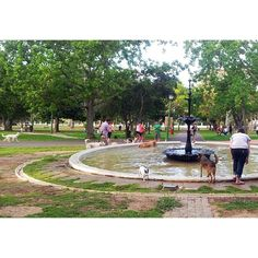 Deer park and De Waal Park in vrede hoek, Also kids play areas in Keurboom park Rondebosch, Palmboom park Newlands, Kids Play Area, Play Areas, Deer Park, Cape Town, South Africa, Followers, Travel Destinations, Boards, African