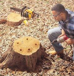 How to remove a stump in 2 – 3 days instead of 2 – 3 years » The Homestead Survival