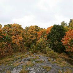 Metsäläinen löytää metsän vaikka keskeltä Helsinkiä. Kiva kaupunki juosta.  #forest #autumn
