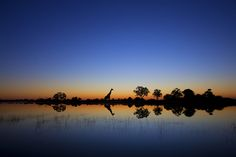 Wildlife Silhouettes Set Against a South African Backdrop - My Modern Metropolis