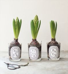 What to do with your empty Diptyques...