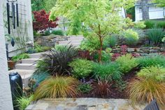 Too beautiful colour fine foliage — Sophie Ingoldsby http://www.houzz.com/projects/882527/moraga-country-club-small-frontyard