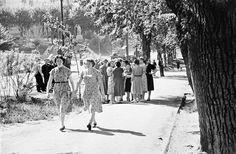 Фридлянд. ТГУ, 1950-е