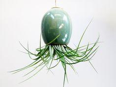 Hanging AirPlant Pod tm  stunning blue green by mudpuppy on Etsy, $16.00