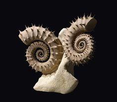 Fossile : Ammonite – Ammonite du Mésozoïque (250-65 Ma) – Mesozoic (250-65 My)