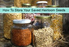 How To Store Your Saved Heirloom Seeds Read HERE --- > http://www.livinggreenandfrugally.com/store-saved-heirloom-seeds/