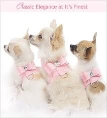 Dog accessories - Google Search