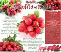 Benefits of radishes: rich in vitamins C, folic acid, and anthocyanocides. Benefits of radishes: rich in vitamins C, folic acid, and anthocyanocides. Health Benefits Of Radishes, Coconut Health Benefits, Fruit Benefits, Natural Antibiotics, Healthy Oils, Folic Acid, Stop Eating, Clean Eating, Back To Nature