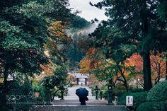 Kanshin-ji Temple -観心寺- http://ift.tt/1NSxydt 500pxInstagramautumnbeautifulfallfogforestgreenjapanleavesmistnatureredtempletreevscoyellow