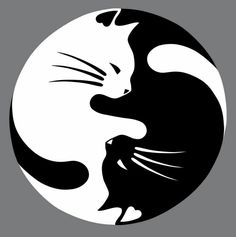 WHAT'S IN THE BOX 1 yin yang cat car decal. DESIGN 2 color options to choose from: white and black (colors may vary). NOTE: White may appear silver- shines white at night because it's made of reflecti Cat Stickers, Cat Drawing, Crazy Cats, Rock Art, Cat Art, Cats And Kittens, Siamese Cats, Kitty Cats, Cute Cats