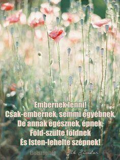 Embernek