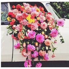 Flower Porn  #blooms #flowers #love