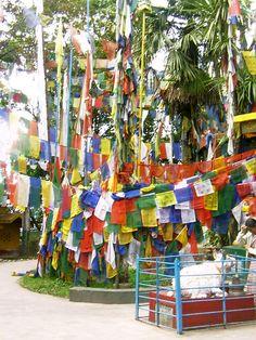 #magiaswiat #podróż #zwiedzanie # dardżyling #blog #azja #katedra #indie #pałac #ogrody #zabytki #swiatynia #stupa #kolejka #pociag #mahakala #tigerhill #wschod #słońce #yigachoeling #monastery #miasto #drukthuptensangag # cholingmonastery #himalaje Indie, Fair Grounds, Outdoor Decor, Blog, Fun, Blogging, Hilarious